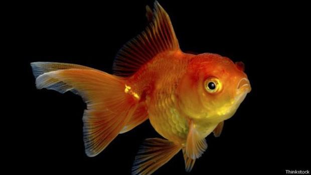 peixinho-dourado Jogos Mobile perderam seu encanto... e agora?