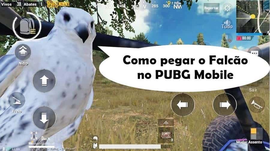 como-pegar-falcao-passaro-pubg-mobile Como pegar o Pássaro (Falcão) no PUBG Mobile